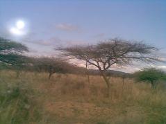 Kwazulu-Natal-tree, Durban, South-Africa