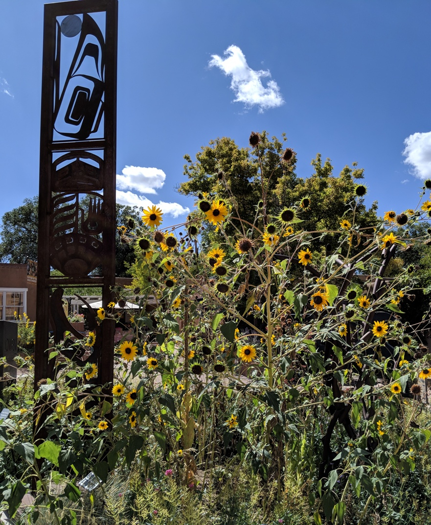 santa fe sunflowers