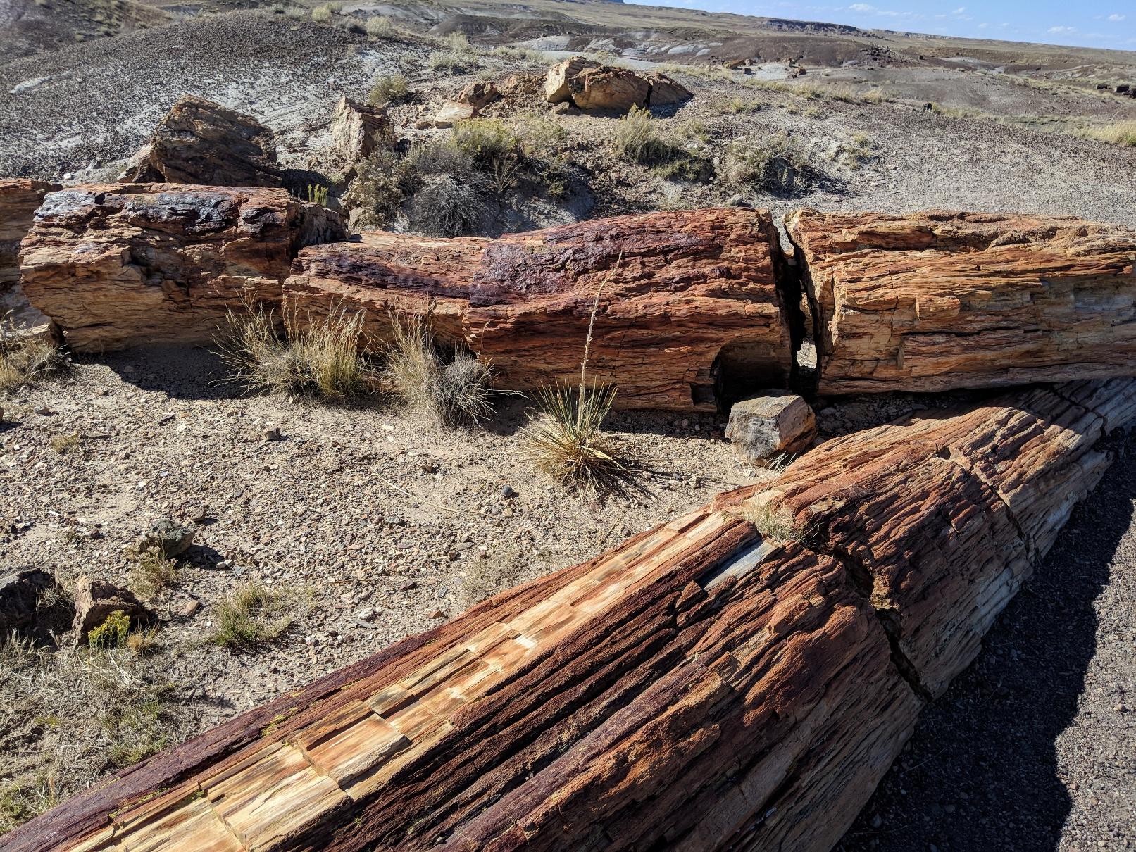 Pet Forest logs