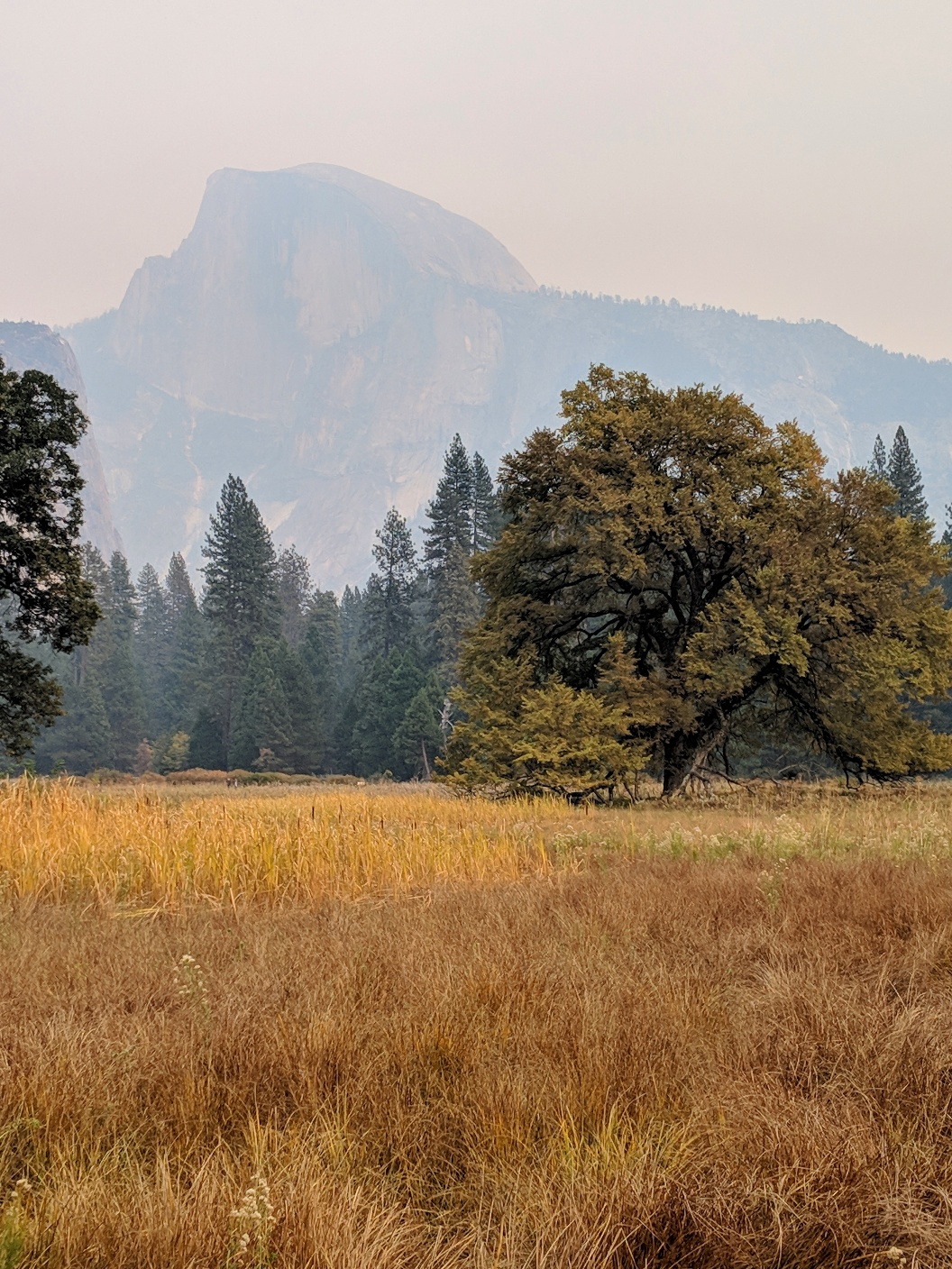 Half Dome from the meadow in Yosemite Valley